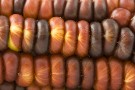Macro photo of red indian corn photo