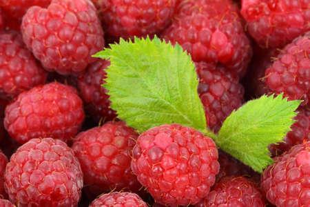 fresh raspberry background with a green leaf