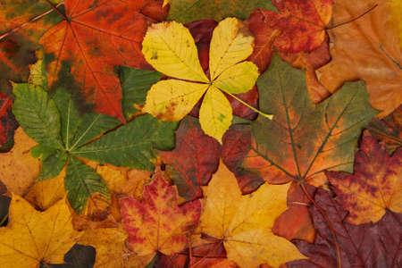 colorful autumn leaf background image Stock Photo - 8260638