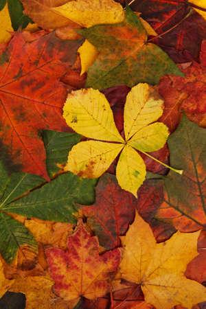 colorful autumn leaf texture Stock Photo
