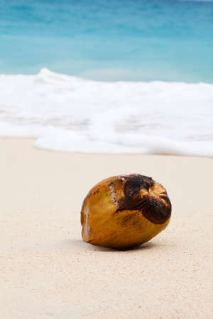 coconut on beach in sand Stock Photo