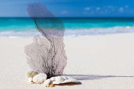 sea and beach concept image