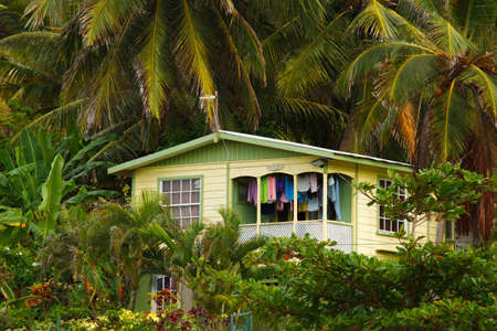 small house in tropical forest
