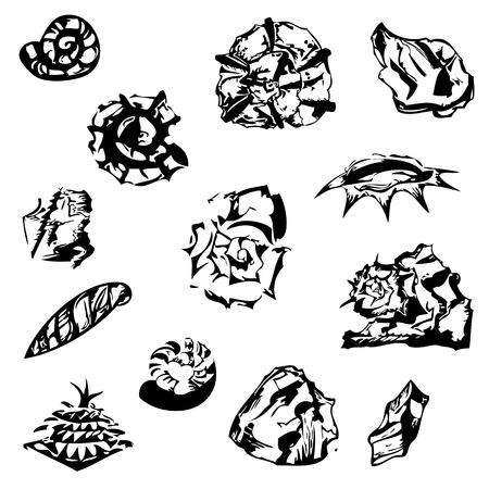 fir cone: conchas gr�ficas, piedras y un cono de pino. objetos naturales