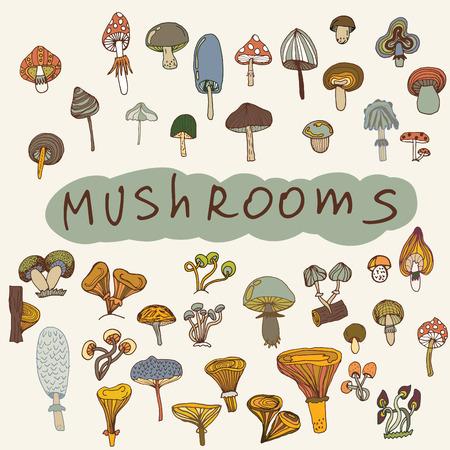 handdrawn: Set of hand-drawn mushrooms. illustration mushroom