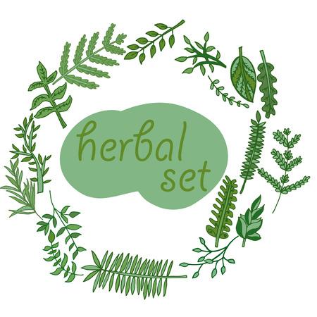 herbal set hand-drawn. Herbs set, vector hand drawn illustration Vector