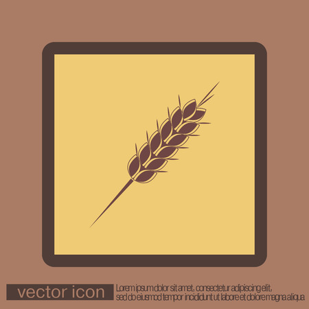 wheat grain: wheat spike ears icon