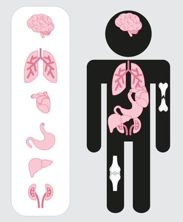 Human organs icons. Medical human organs icon set with body.