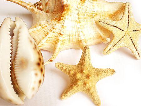 seashells: shells        Stock Photo