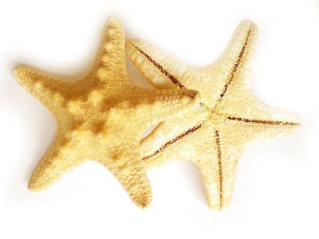 thalasso: étoile de mer