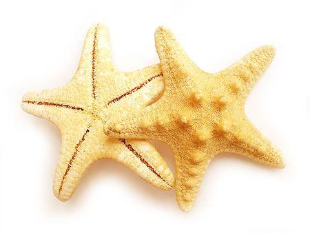 fish star: estrella de pescado  Foto de archivo