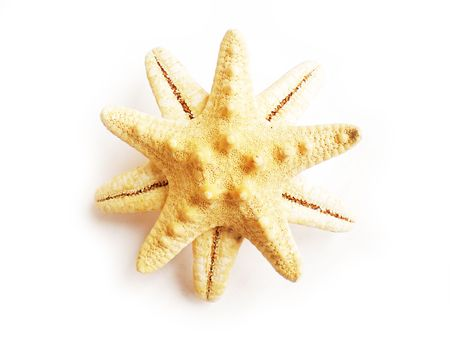 EASE: star fish         Stock Photo