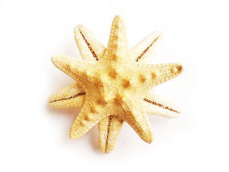 thalasso: star poisson