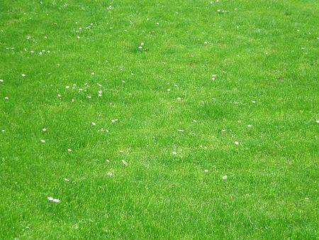 green grass Stock Photo - 3212630