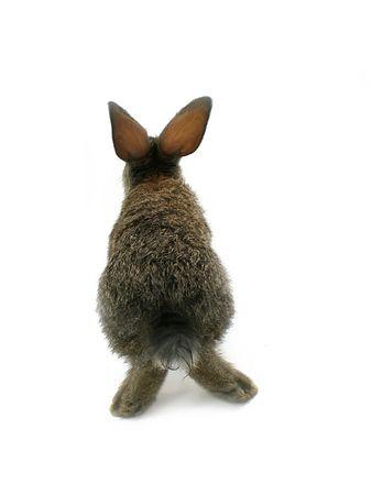 rabbits back photo