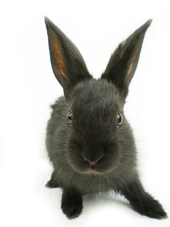 rabbit Stok Fotoğraf - 3261307