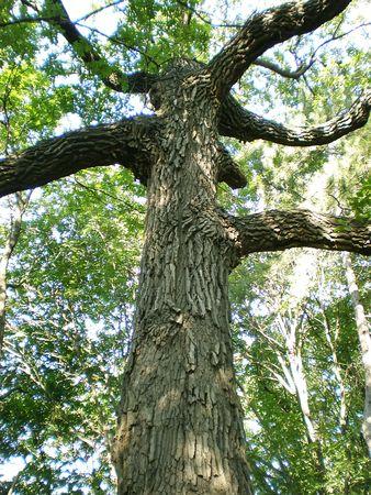 big tree Stock Photo - 3293728