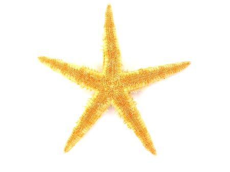 a beautiful starfish isolated on white background photo