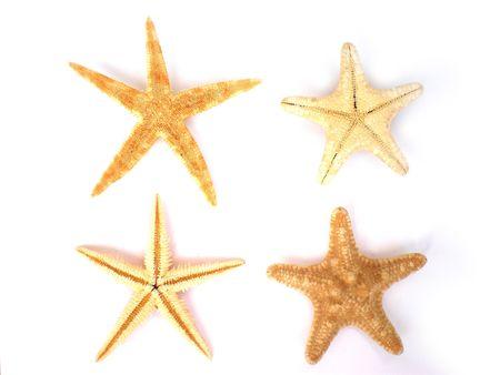 four beautiful starfish isolated on white background photo