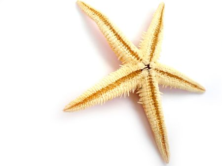a beautiful starfish isolated on white background photo