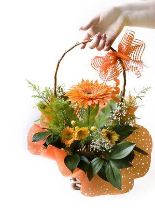 hand giving orange gerbera bouquet in basket over white photo