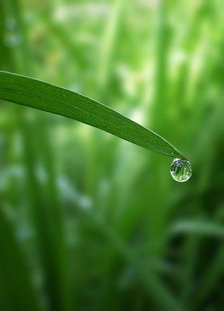 morning dew drop falling from fresh green grass