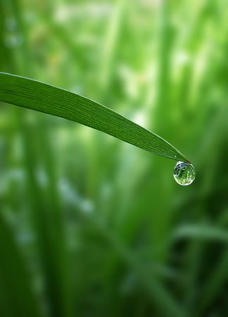 morning dew drop falling from fresh green grass    photo