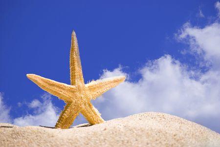 fish star: estrellas de mar y arena en el cielo azul de fondo
