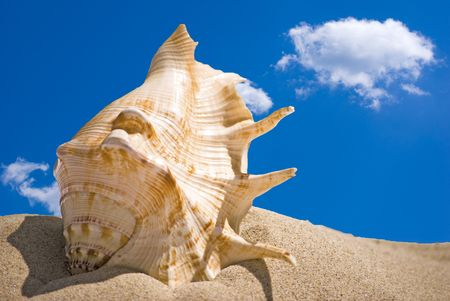 sea shell in sand and blue sky photo