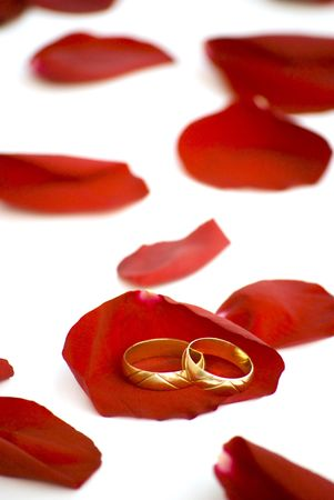 wedding rings over rose petals on white