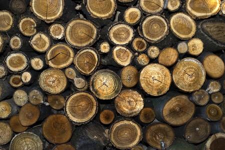 stump log texture Stock Photo - 8077494
