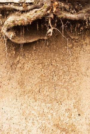 tree roots underground in soil Stock Photo - 9184668