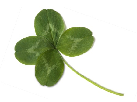 lucky clover: four leaved clover isolated on white background