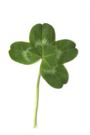 quarter foil: four leaved clover isolated on white background