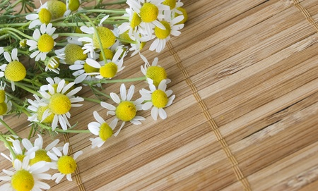 chamomile herb over wooden mat photo