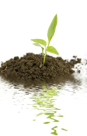 soil conservation: growing new green plant with water reflection isolated on white background Stock Photo