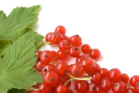 ripe fresh redcurrant isolated on white background photo