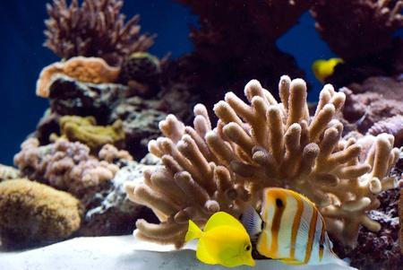 aquarium met kleurrijke tropische vissen en koralen Stockfoto