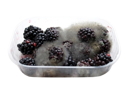 moldy: rotten blackberries in a plastic box isolated on white Stock Photo