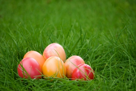 colorful easter eggs on green grass background photo