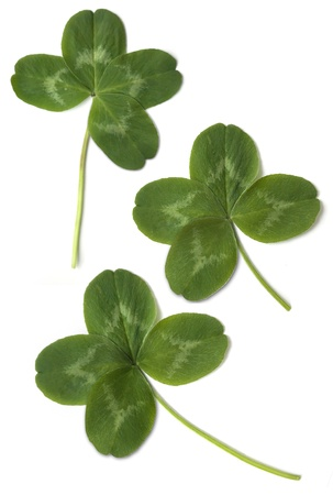 four leaved: four leaved clover isolated on white background