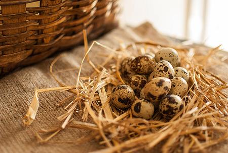 quail: healthy fresh organic quail eggs