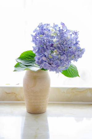 huge bue hydrangea in a vase against a window backlight