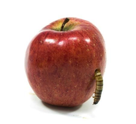ワームが白にかまれたリンゴ分離株から出てくる