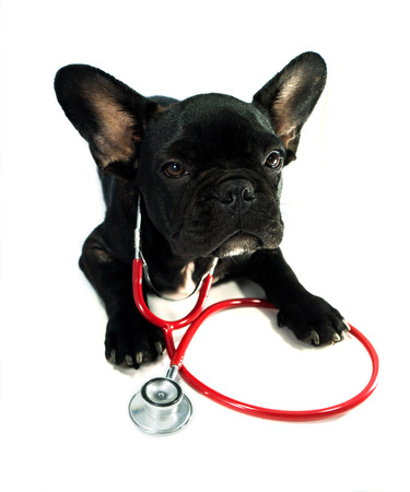 dog health: dog and a stethoscope isolated on white background