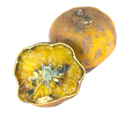 rotten orange isolated on white Stock Photo - 25865473