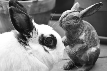English Spotted rabbit with a rabbit statuette