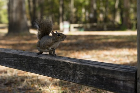 national parks: The squirrel autumn day in the US National Parks Stock Photo