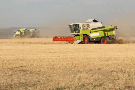 tenure: Green combine working on the wheat field