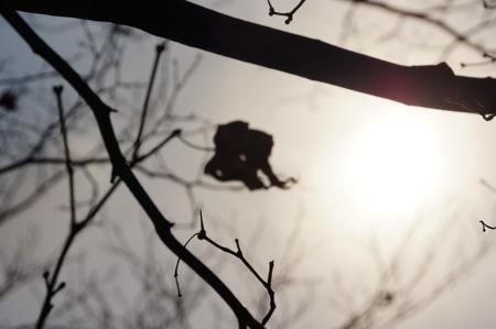 dried leaf: Dried leaf under the sunlight